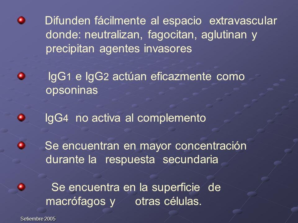 IgG1 e IgG2 actúan eficazmente como opsoninas