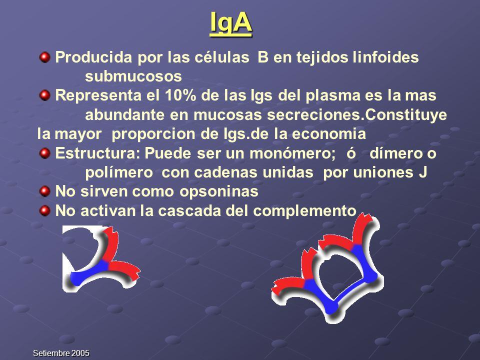 IgA Producida por las células B en tejidos linfoides submucosos