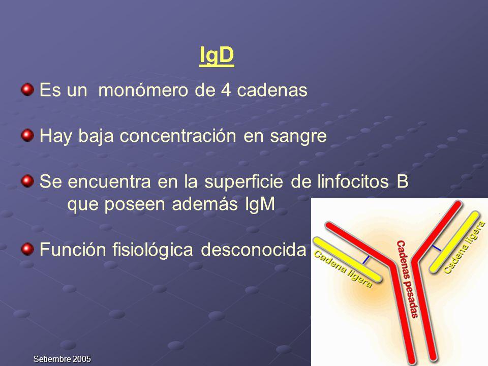 IgD Es un monómero de 4 cadenas Hay baja concentración en sangre