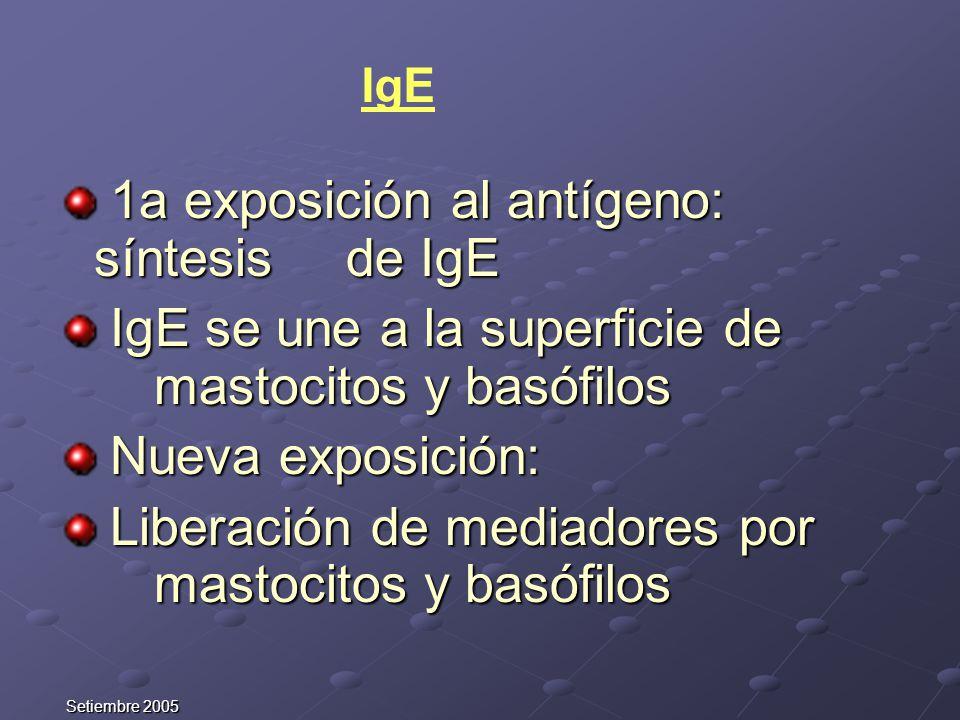 1a exposición al antígeno: síntesis de IgE