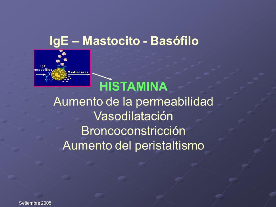 IgE – Mastocito - Basófilo