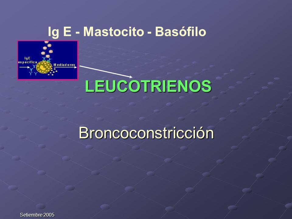 Broncoconstricción Ig E - Mastocito - Basófilo LEUCOTRIENOS