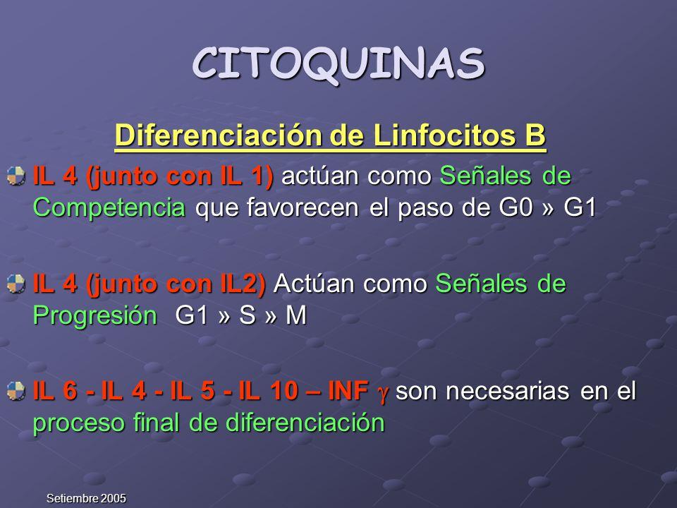 Diferenciación de Linfocitos B