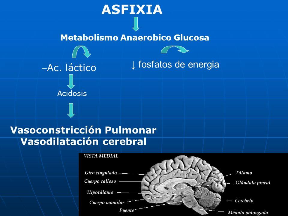 ASFIXIA ↓ fosfatos de energia Ac. láctico Vasoconstricción Pulmonar