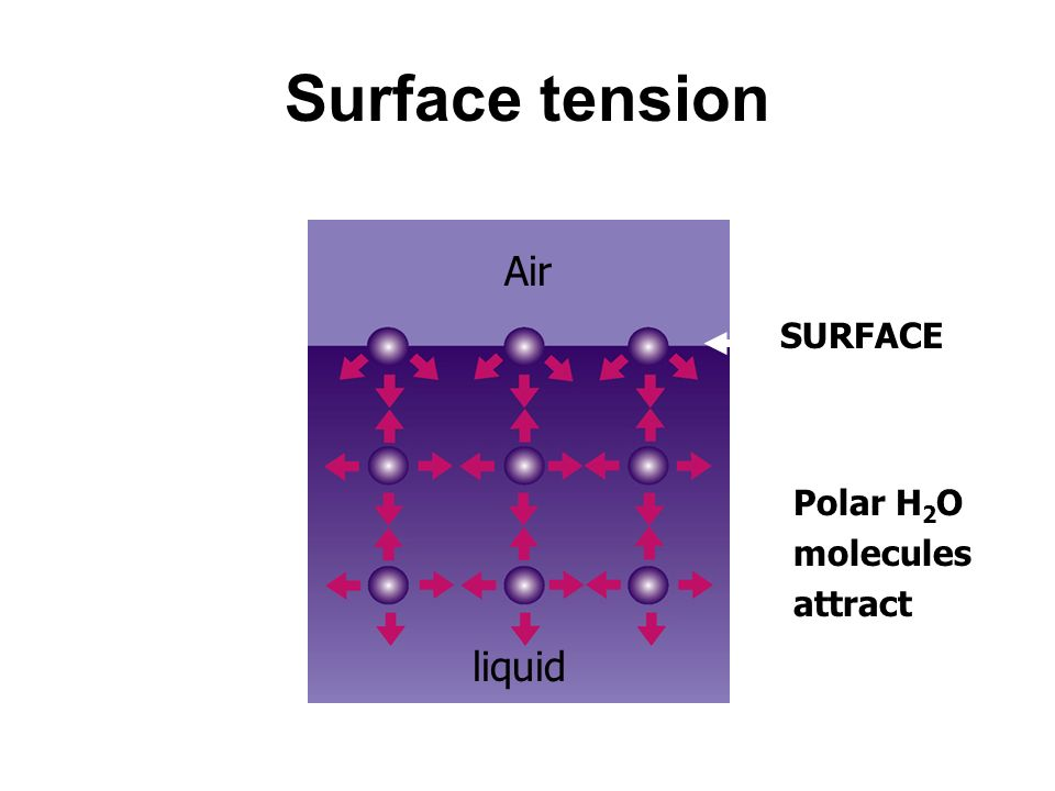 Surface tension Air SURFACE Polar H2O molecules attract liquid