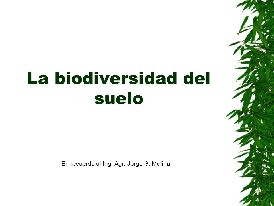 La biodiversidad del suelo