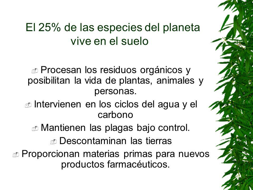 El 25% de las especies del planeta vive en el suelo