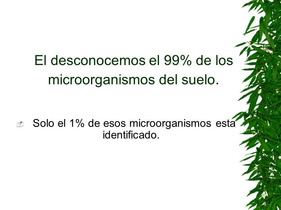 El desconocemos el 99% de los microorganismos del suelo.