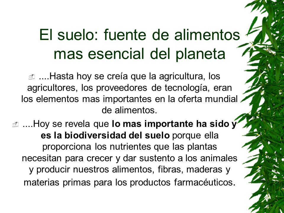 El suelo: fuente de alimentos mas esencial del planeta