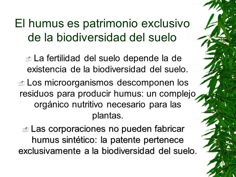 El humus es patrimonio exclusivo de la biodiversidad del suelo