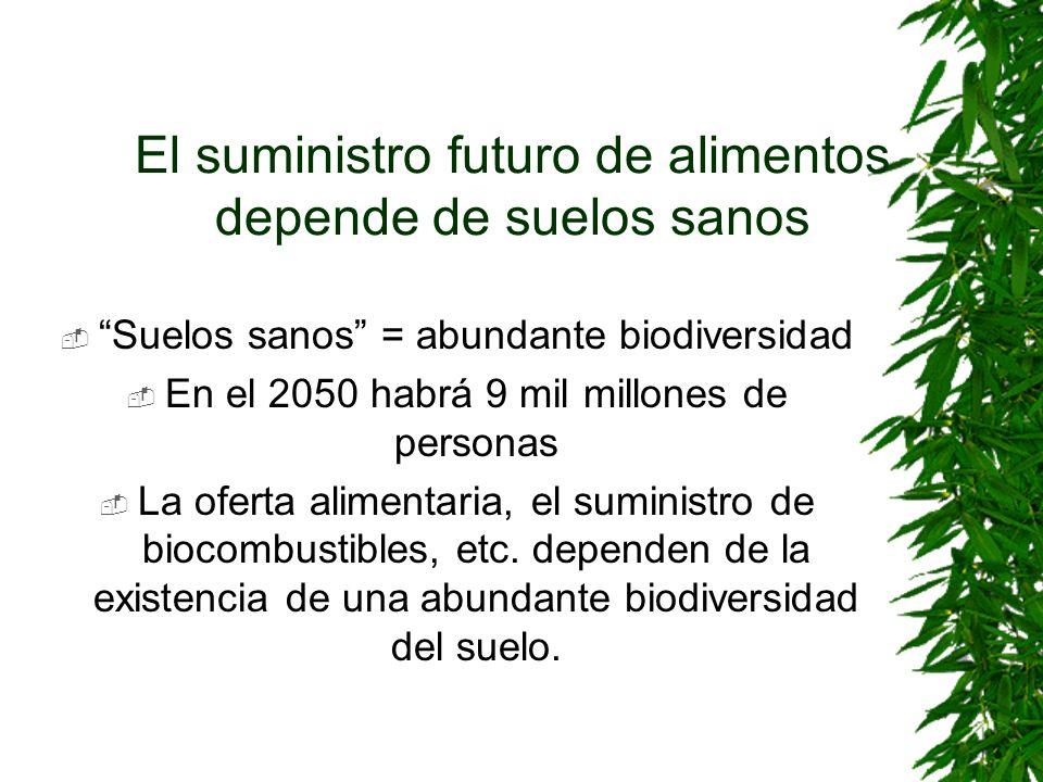 El suministro futuro de alimentos depende de suelos sanos