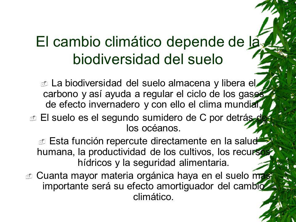 El cambio climático depende de la biodiversidad del suelo