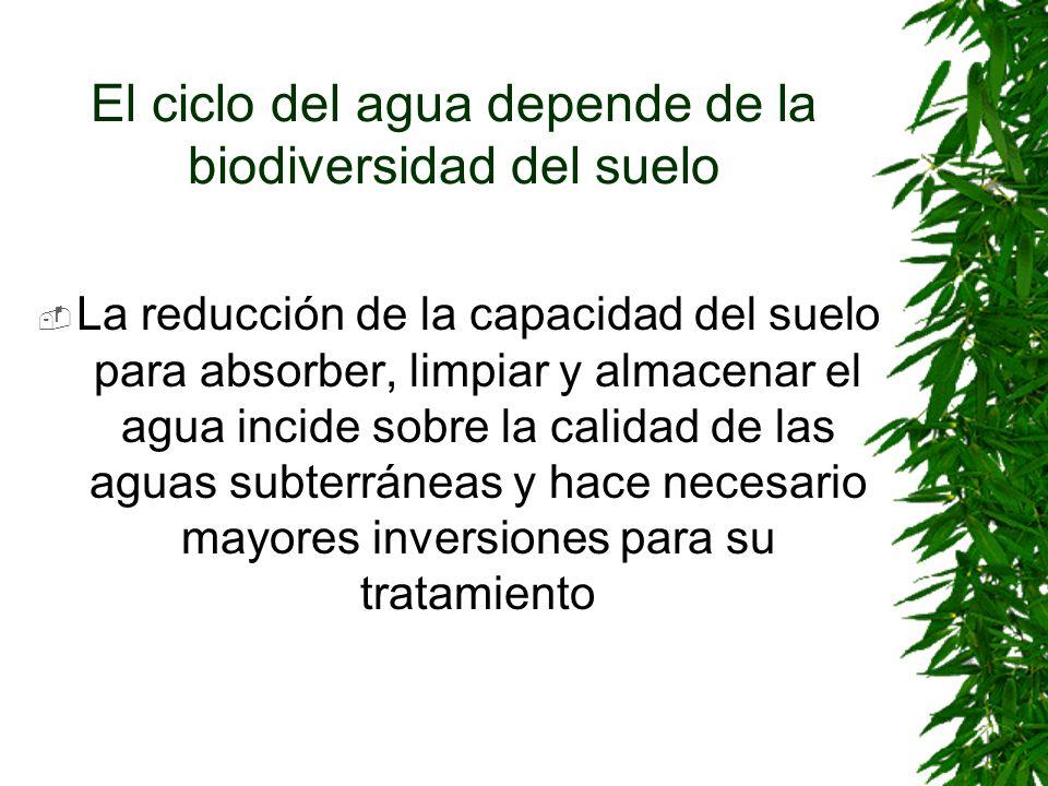 El ciclo del agua depende de la biodiversidad del suelo