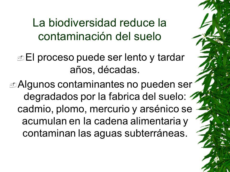 La biodiversidad reduce la contaminación del suelo