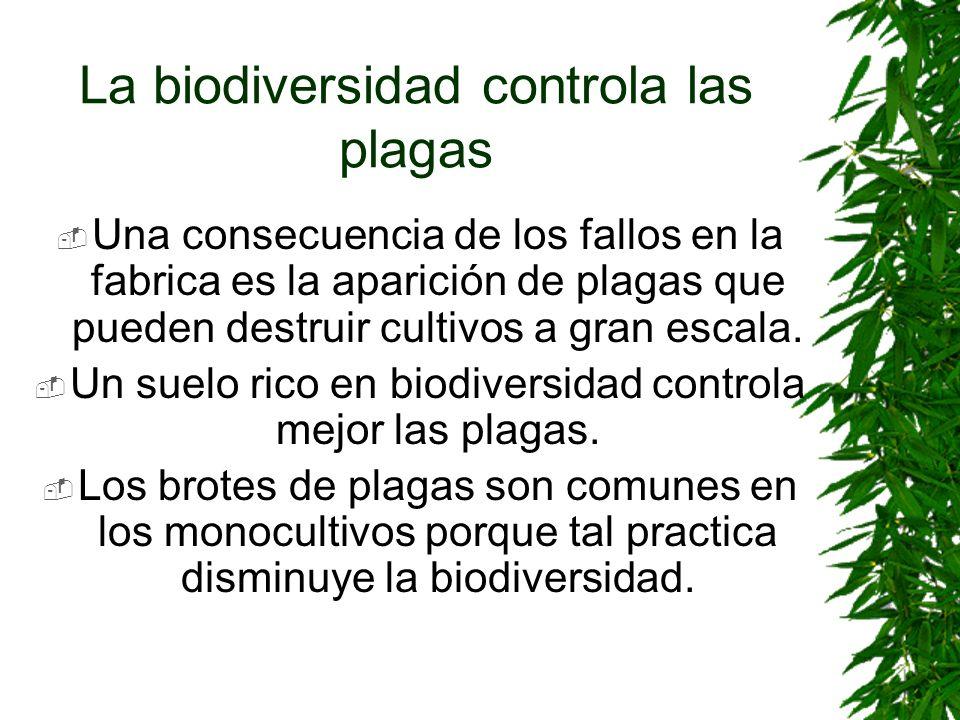 La biodiversidad controla las plagas