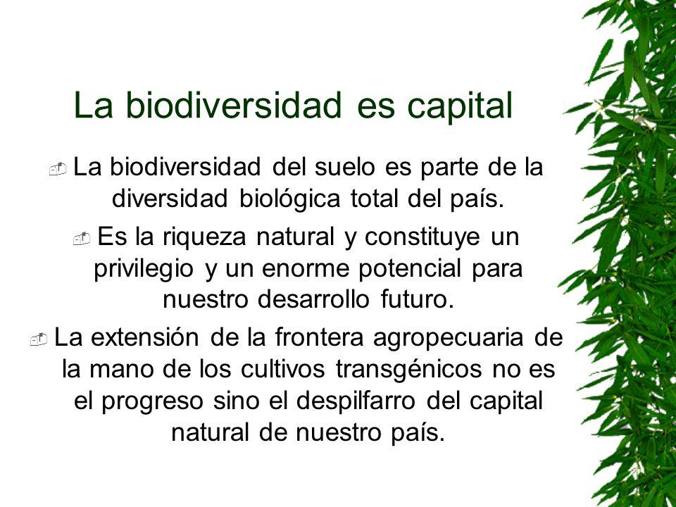La biodiversidad es capital