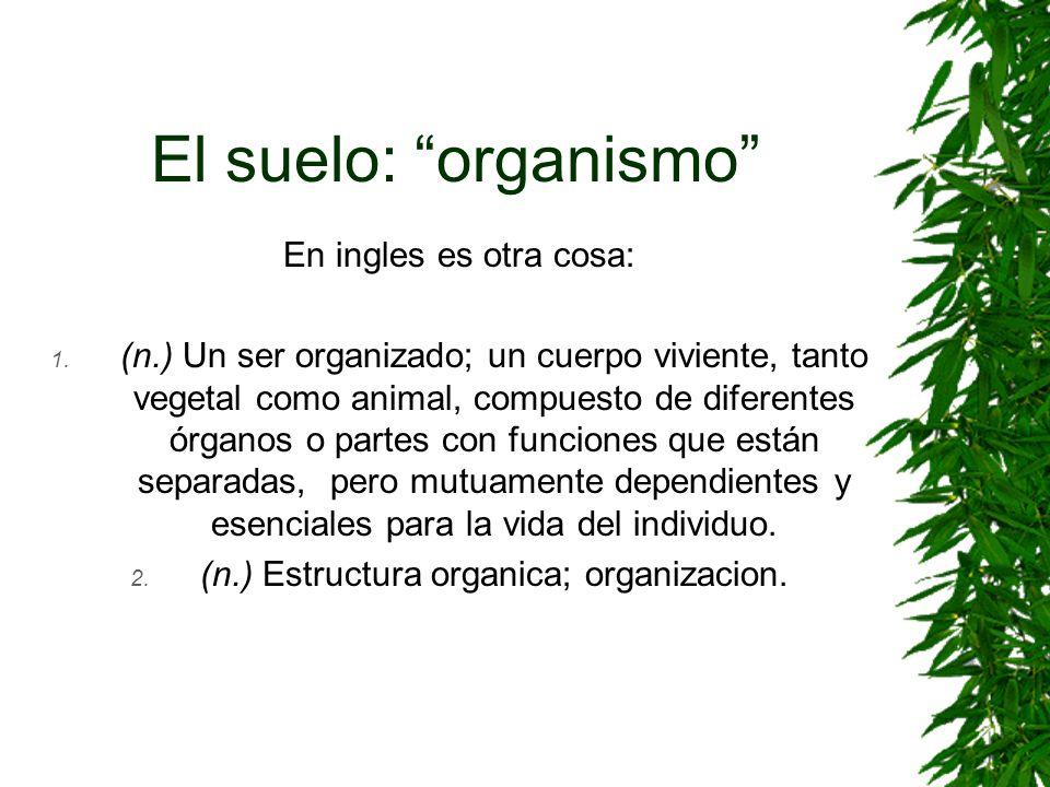 (n.) Estructura organica; organizacion.