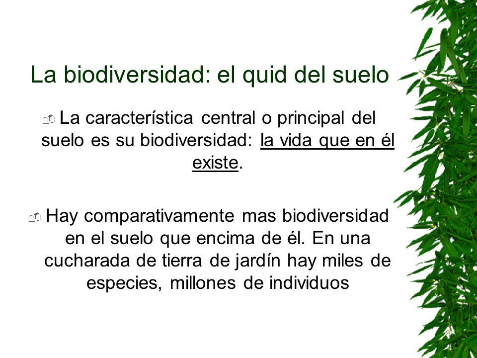 La biodiversidad: el quid del suelo