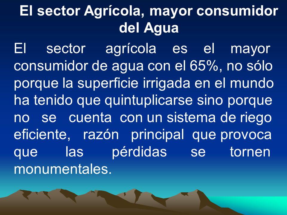 El sector Agrícola, mayor consumidor del Agua