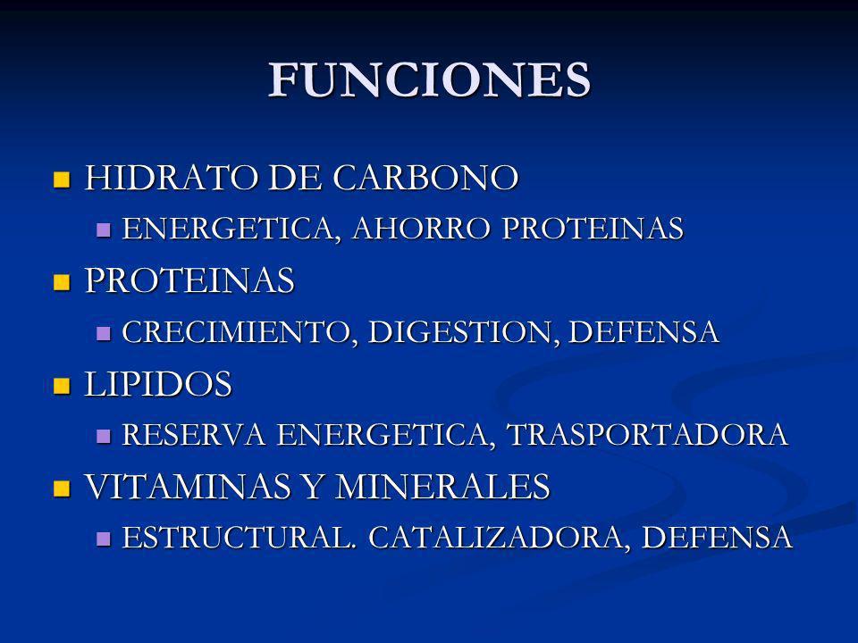 FUNCIONES HIDRATO DE CARBONO PROTEINAS LIPIDOS VITAMINAS Y MINERALES