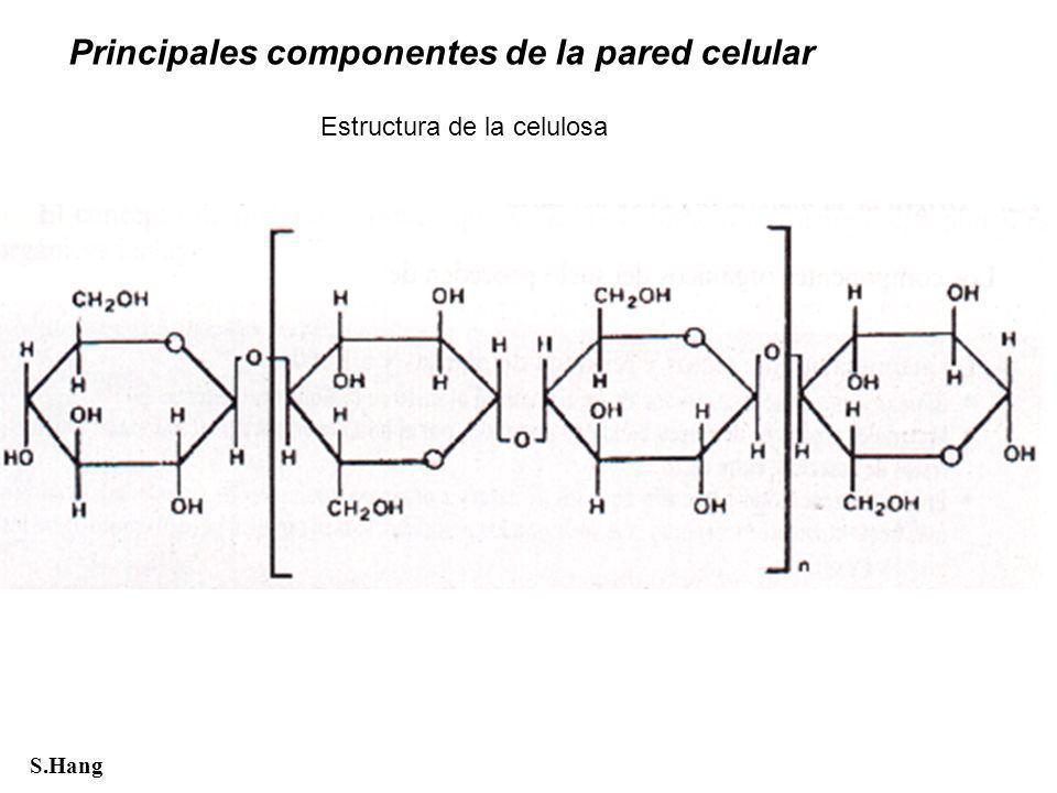 Principales componentes de la pared celular