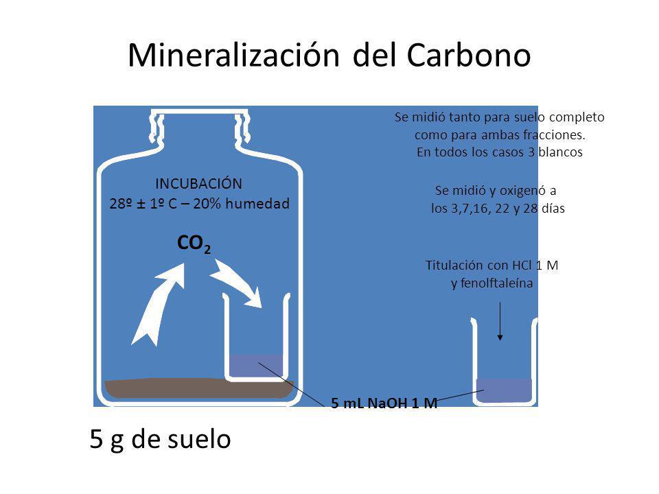 Mineralización del Carbono
