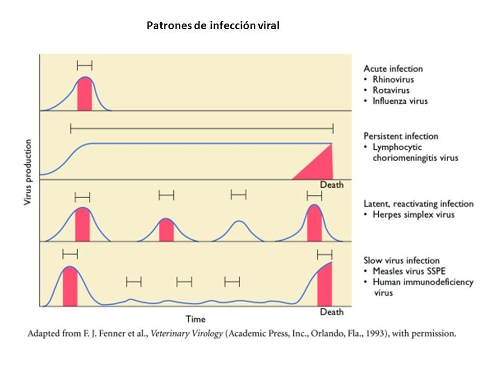 Patrones de infección viral