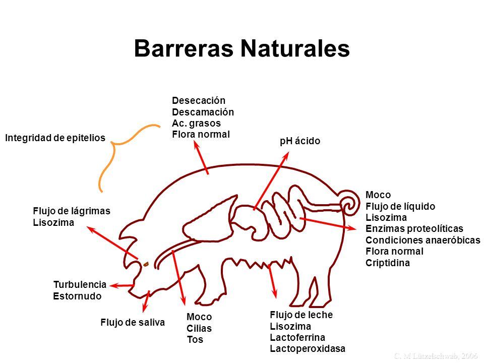 Barreras Naturales Desecación Descamación Ac. grasos Flora normal