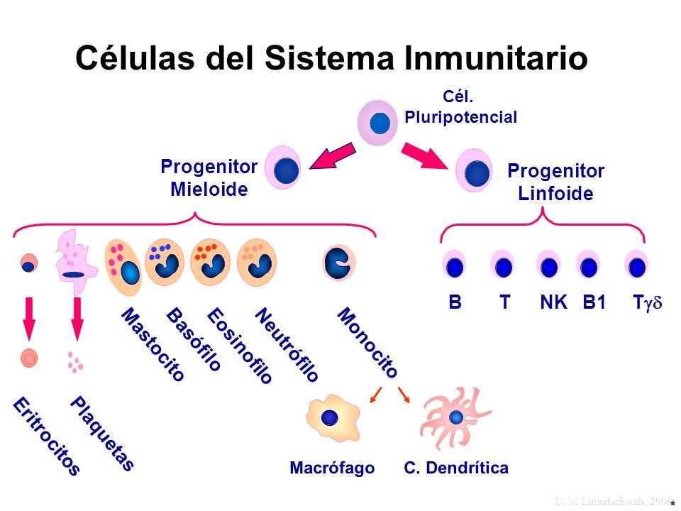 Células del Sistema Inmunitario