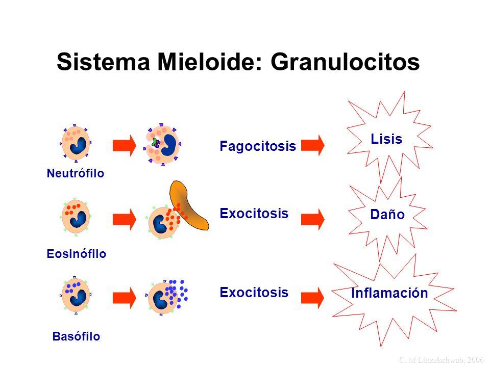 Sistema Mieloide: Granulocitos