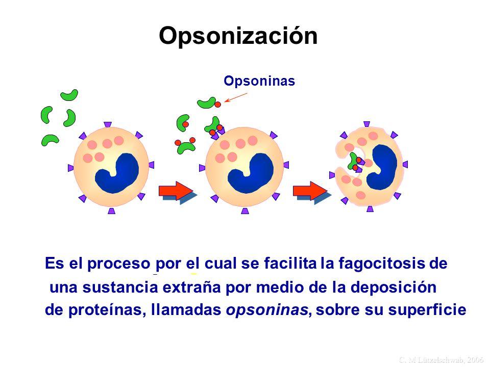 Opsonización Es el proceso por el cual se facilita la fagocitosis de