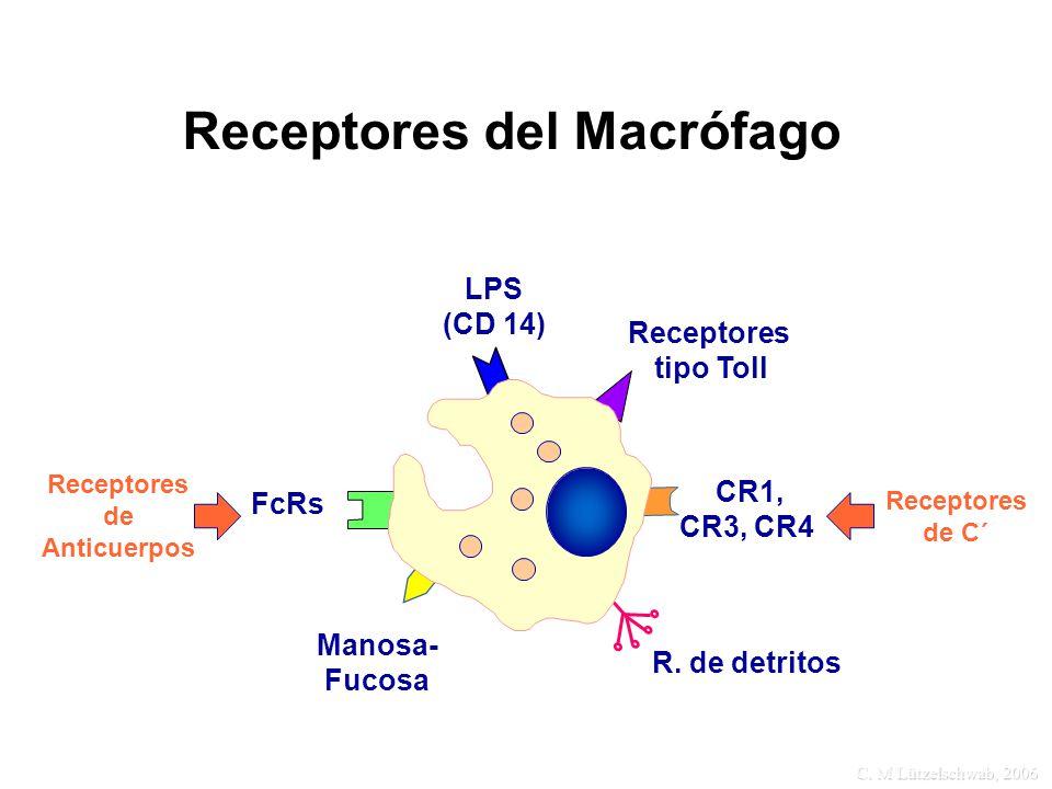Receptores del Macrófago
