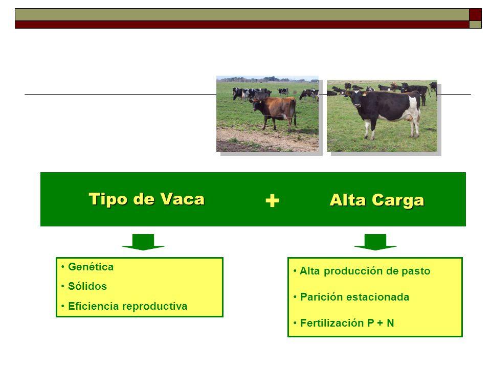 + Tipo de Vaca Alta Carga Genética Sólidos Eficiencia reproductiva
