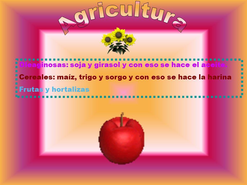 Agricultura Oleaginosas: soja y girasol y con eso se hace el aceite.