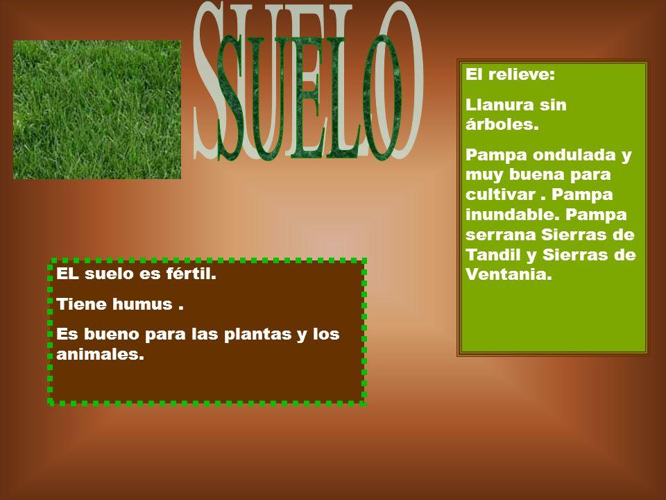 SUELO El relieve: Llanura sin árboles.