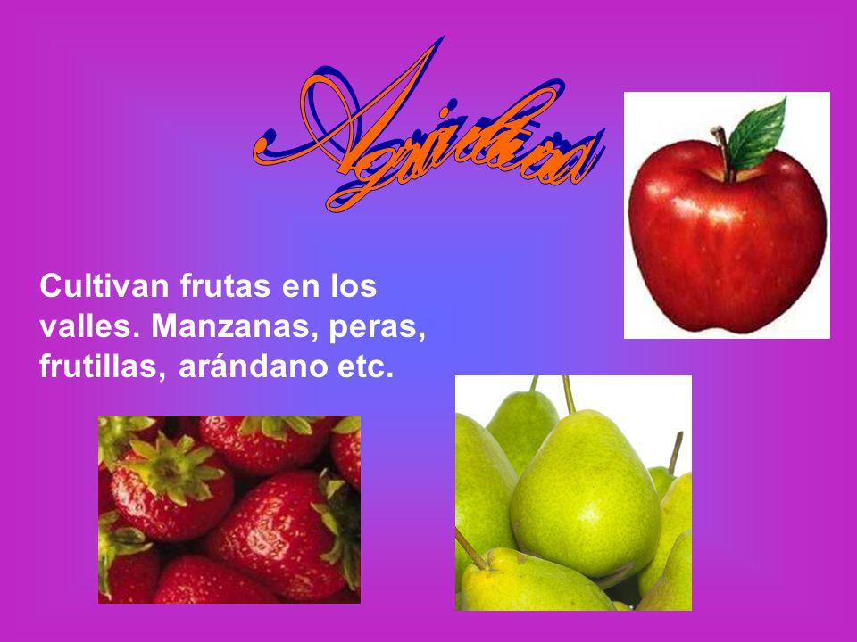 Agricultura Cultivan frutas en los valles. Manzanas, peras, frutillas, arándano etc.