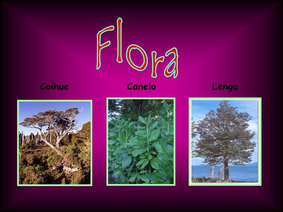 Flora Coihue Canelo Lenga