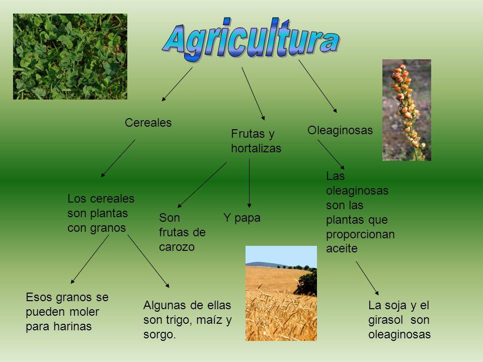 Agricultura Cereales Oleaginosas Frutas y hortalizas
