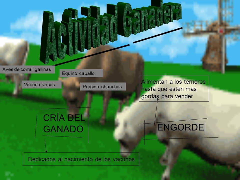 Actividad Ganadera CRÍA DEL GANADO ENGORDE
