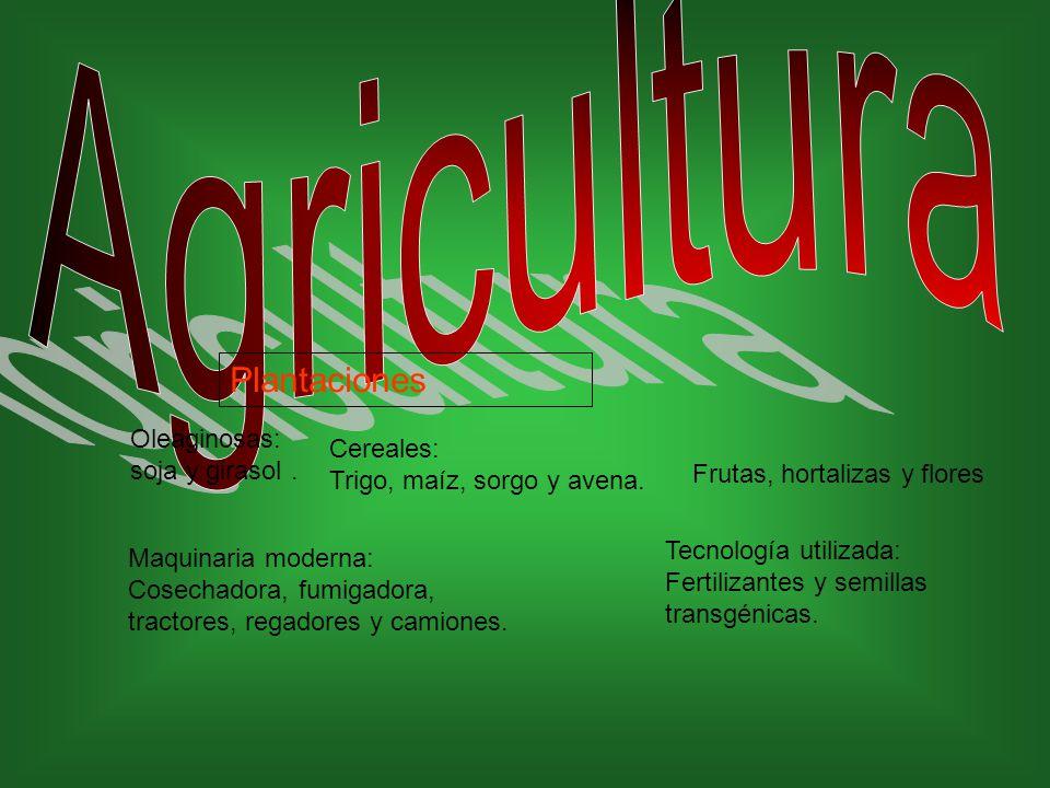 Agricultura Plantaciones Oleaginosas: soja y girasol . Cereales: