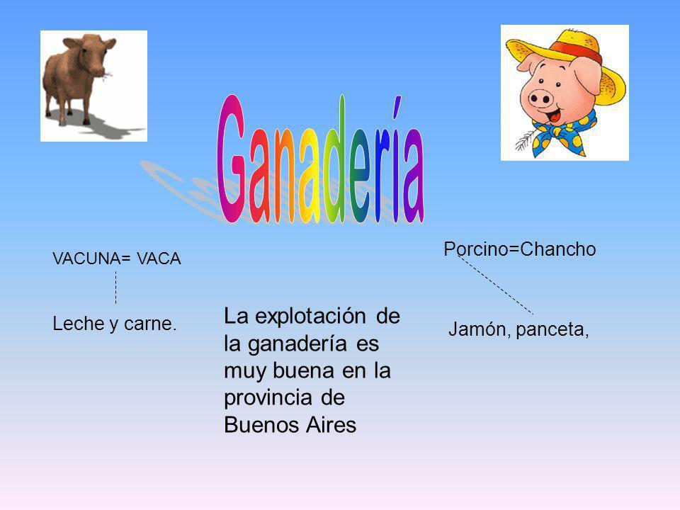 Ganadería Porcino=Chancho. VACUNA= VACA. La explotación de la ganadería es muy buena en la provincia de Buenos Aires.
