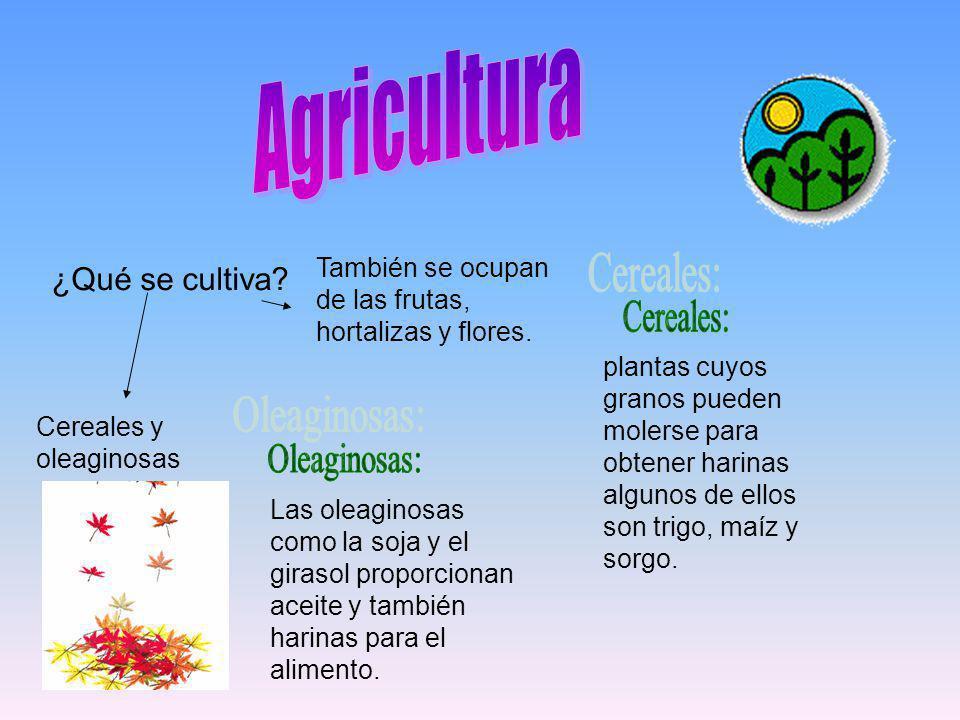 Agricultura Cereales: Oleaginosas: ¿Qué se cultiva
