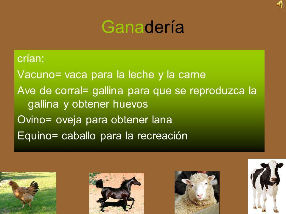 Ganadería crían: Vacuno= vaca para la leche y la carne