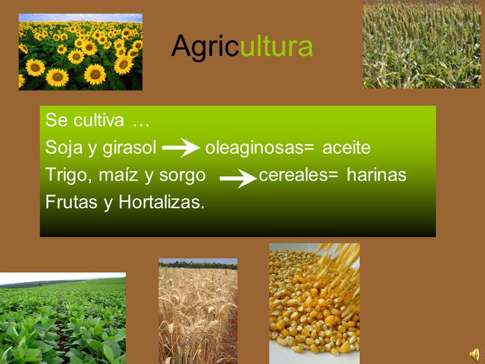 Agricultura Se cultiva … Soja y girasol oleaginosas= aceite