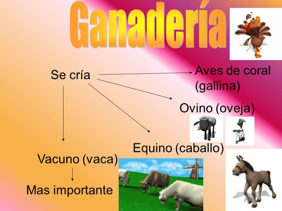 Ganadería Aves de coral (gallina) Se cría Ovino (oveja)