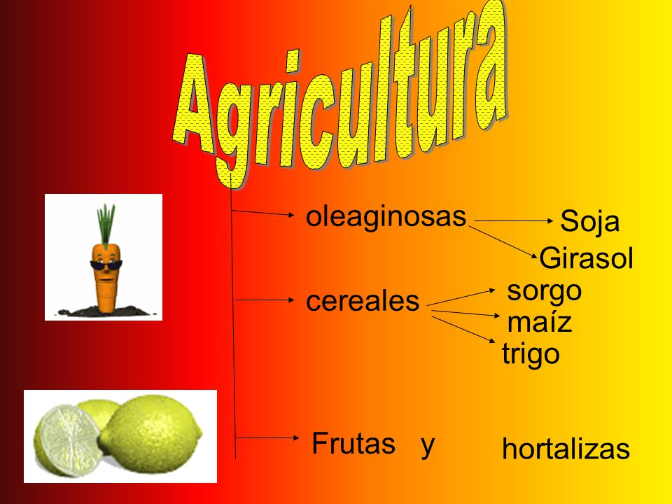 Agricultura oleaginosas Soja Girasol sorgo cereales maíz trigo