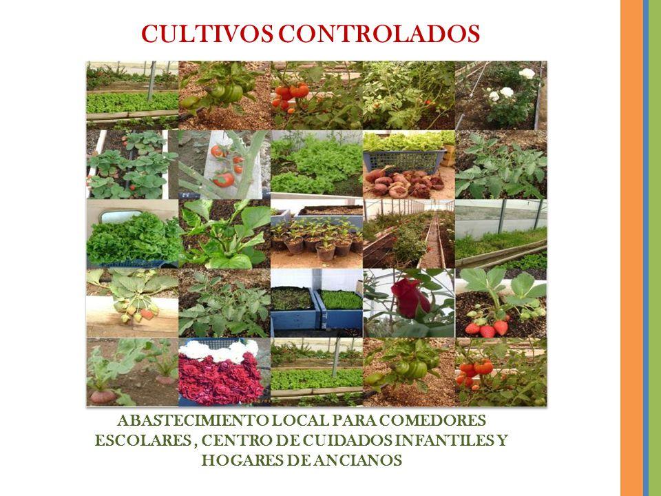 CULTIVOS CONTROLADOS ABASTECIMIENTO LOCAL PARA COMEDORES ESCOLARES , CENTRO DE CUIDADOS INFANTILES Y HOGARES DE ANCIANOS.