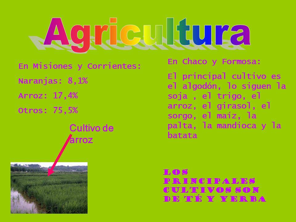 Agricultura Cultivo de arroz En Chaco y Formosa: