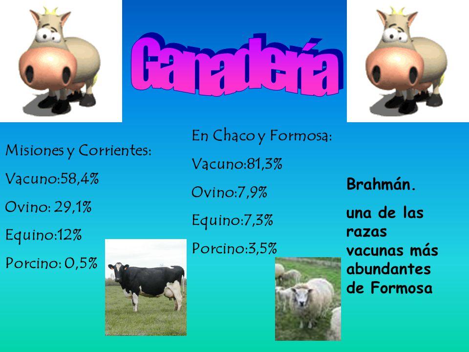 Ganadería En Chaco y Formosa: Vacuno:81,3% Misiones y Corrientes: