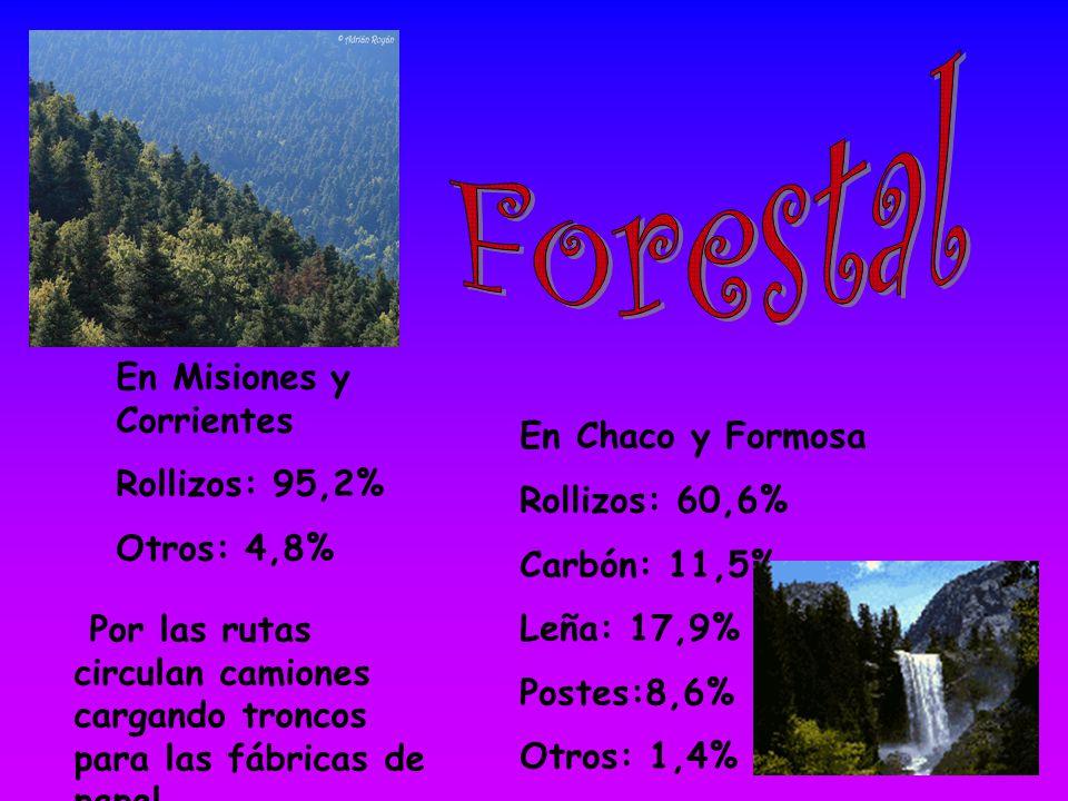 Forestal En Misiones y Corrientes Rollizos: 95,2% En Chaco y Formosa
